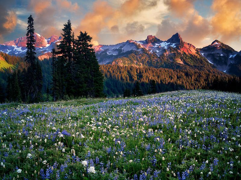 Sunrise with wildflowers and Tatoosh Mountains. Mt. Rainier National Park, Washington