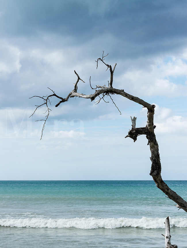 Jagged piece of driftwood reaching out to the ocean water, Negril, Jamaica
