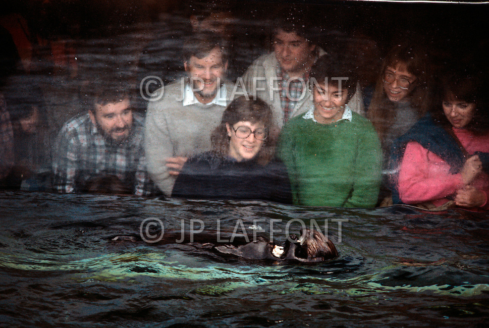 December 11, 1984 - Monterey Bay, California. Visitors watch a seal play in the water of the aquarium. The Monterey Bay Aquarium, located on Cannery Row of the Pacific Ocean in Monterey California, was founded in 1984 and holds thousands of plants and animals. The annual attendance of the aquarium is 1.8 million visitors.