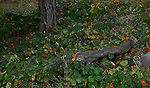 Shade loving flowers bloom in a wooded area.  (DOUG WOJCIK MEDIA)