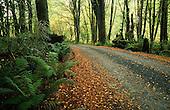 Ferns alongside the road to Lake Gunn, Fiordland National Park, South Island, New Zealand.