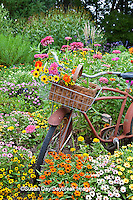 63821-22203 Old bicycle with flower basket in garden with zinnias,  Marion Co., IL