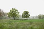 Europa, DEU, Deutschland, NRW, Nordrhein-Westfalen, Rheinland, Niederrhein, Straelen, Typische Landschaft, Regen, Dunst, Baeume, Kategorien und Themen, Natur, Umwelt, Landschaft, Landschaftsfotos, Landschaftsfotografie, Landschaftsfoto, Wetter, Wetterelemente, Wetterlage, Wetterkunde, Witterung, Witterungsbedingungen, Wettererscheinungen, Meteorologie, Wettervorhersage<br /> <br /> [Fuer die Nutzung gelten die jeweils gueltigen Allgemeinen Liefer-und Geschaeftsbedingungen. Nutzung nur gegen Verwendungsmeldung und Nachweis. Download der AGB unter http://www.image-box.com oder werden auf Anfrage zugesendet. Freigabe ist vorher erforderlich. Jede Nutzung des Fotos ist honorarpflichtig gemaess derzeit gueltiger MFM Liste - Kontakt, Uwe Schmid-Fotografie, Duisburg, Tel. (+49).2065.677997, ..archiv@image-box.com, www.image-box.com]