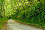 Rural dirt road through green trees and forest along the Coastal Drive, Redwood National Park, California