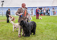 Dog show at Staffordshire Show.