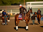 OCT 29: Breeders' Cup Juvenile Fillies Turf entrant Croughavouke, trained by Jeff Mullins, at Santa Anita Park in Arcadia, California on Oct 29, 2019. Evers/Eclipse Sportswire/Breeders' Cup