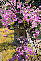 Japanese stone lanterns were functional ornaments and are  still kept in the garden as a reminder of yesterday.