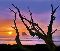 Cape Meares and driftwood in Tillamook County Oregon