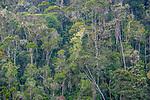 Rainforest, Madagascar