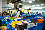 le 4 mai 2017, la premiere vente se débute à 6 heures du matin et concerne la pêche hauturière. les mareyeurs de toute la région viennent y acheter leurs poissons.