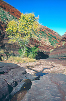 GEOLOGY- AMERICAN  WEST<br /> Hance Creek w/Cottonwood Tree<br /> Grand Canyon, National Park,  AZ