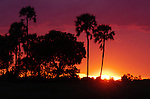 Sunset in the Okavango Delta in Botswana.