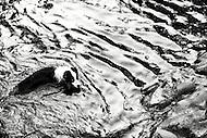 Image Ref: YR089<br /> Location: Warburton<br /> Date of Shot: 8th Feb 2014