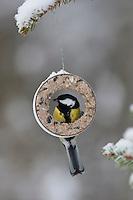 Kohlmeise an der Vogelfütterung, Fütterung im Winter bei Schnee, am Meisenring, Meisenknödel, Fettfutter, Winterfütterung, Kohl-Meise, Meise, Parus major, great tit
