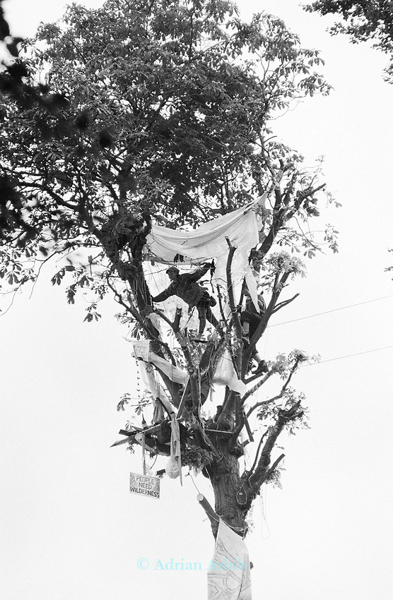 Tree pixie at whitecroft woods during the evictions<br /> <br /> <br /> Solsbury Hill road protest