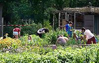 Nederland  Amsterdam 2020.  Schooltuin H. C. Vink in Park Frankendael.  Foto mag niet in negatieve / schadelijke context gepubliceerd worden.   Foto Berlinda van Dam / Hollandse Hoogte