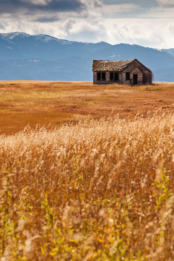 An empty, abandoned farmhouse sits in the middle of a wheat field in Wyoming.