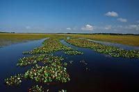 Macapa_AP, Brasil...Area de protecao ambiental, a cerca de 12 quilometros do centro de Macapa, abriga a comunidade quilombola do Curiau. Na foto bacia do rio Curiau...Environmental protection area, about 12 km from the Macapa center, in this area there are quilombo Curiau. In this photo the basin Curiau...Foto: JOAO MARCOS ROSA / NITRO