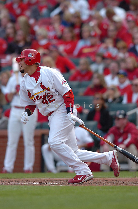 YADIER MOLINA, of the St. Louis Cardinals, in action during the Cardinals game against the Milwaukee Brewers in St. Louis, Missouri on April 15, 2007...Cardinals win 10-2....CHRIS BERNACCHI/ SPORTPICS..