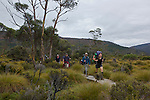 Cradle valley at the north part of the Overland track..Vallée de Cradle.