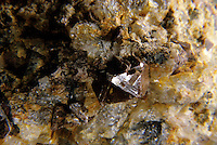 ZIRCON<br />
