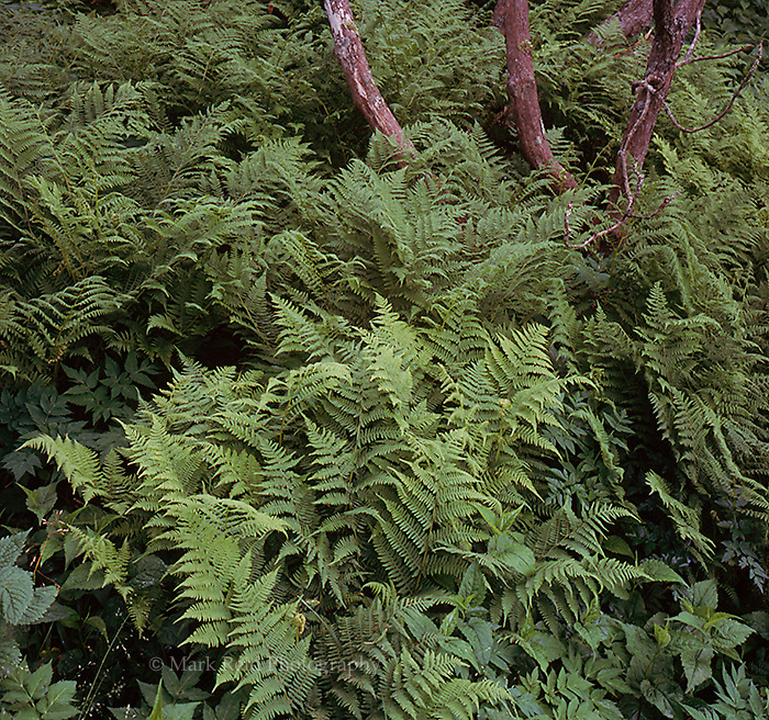Ferns and Tree
