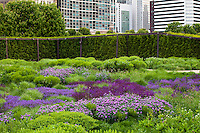 Lurie Garden reconstructed prairie meadow garden at Millenium Park, downtown Chicago rooftop over parking garage; plant design by Piet Oudolf