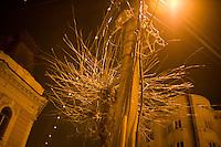 ROMANIA / Transylvania / Cluj / 10.03.2007 / ..Branches surround a telephone pole. ..© Davin Ellicson / Anzenberger