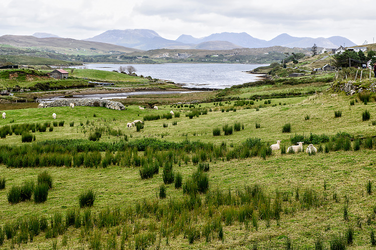 A landscape in scenic Connemara, County Galway, Ireland. The mountains in the distance are known as the Twelve Bens.