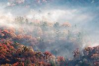 Colorful autumn trees emerging from mist at sunrise, Blue Ridge Mountains, Blue Ridge Parkway near Brevard, North Carolina