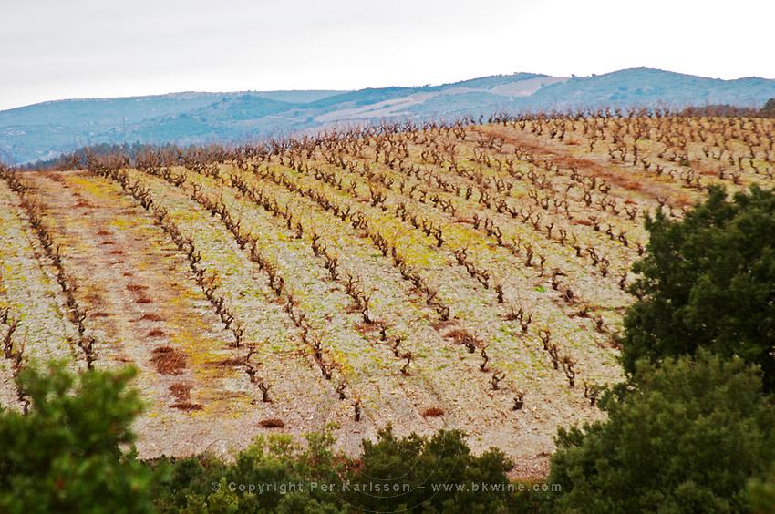 Vines on The Pech Bedet mountain hill between Embres et Castelmaure and Villeneuve les Corbieres on the border between Fitou and Corbieres. Les Corbieres. Languedoc. France. Europe. Vineyard.