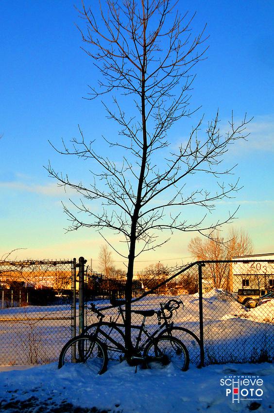 Bare tree serves as a winter bike rack.