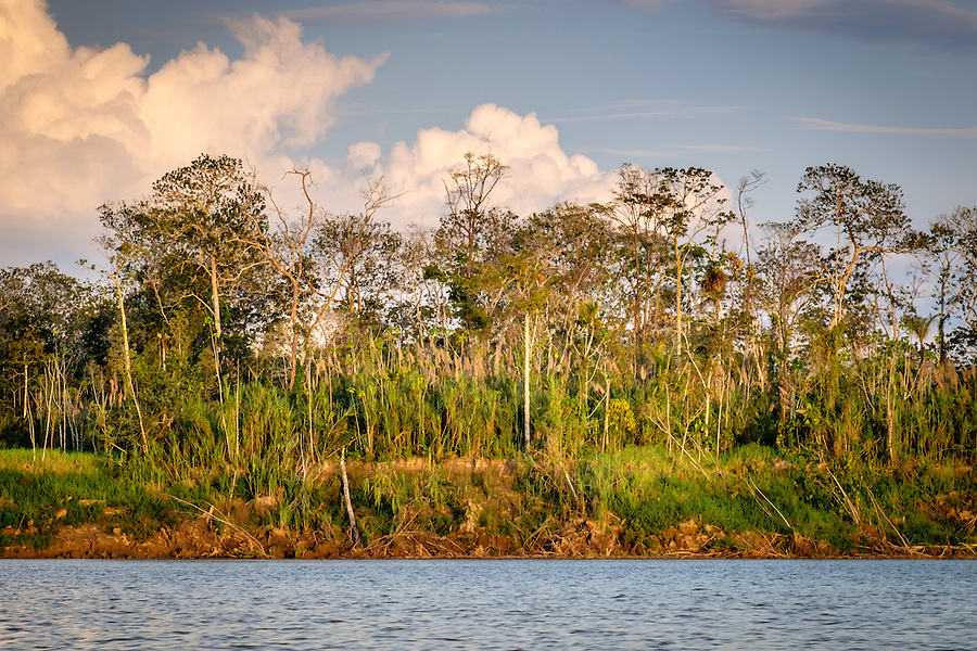 LORETO, PERU - CIRCA OCTOBER 2015:  View of the jungle from the Ucayali River in the Peruvian Amazon.