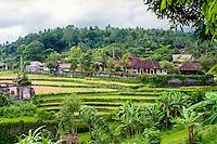 Bali, Karangasem, Tirta Gangga. The small Tirta Gangga village is situated among fertile ricefields.