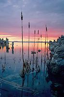 Cattails at sunrise,  Lee Vining Tufa Area<br /> Mono Lake Tufa State Reserve<br /> Mono Basin National Forest Scenic Area<br /> Mono County,  California