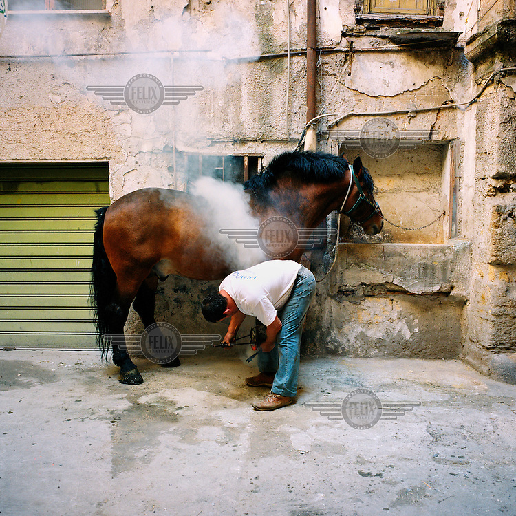 A man shoes a horse in a courtyard in the area of Albergheria.