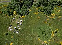 In the hills of the Ard&egrave;che near Mont Gerbier de Jonc, an apiary is installed in June to take advantage of the richness of the late blossoming in the mountains. Yellow broom is scattered across the landscape.<br /> Sur les collines ard&eacute;choises pr&egrave;s du Mont Gerbier de Jonc, un rucher est install&eacute; en juin pour profiter de la richesse des floraisons plus tardive de montage. Les gen&ecirc;ts jaunes pars&egrave;ment le paysage.