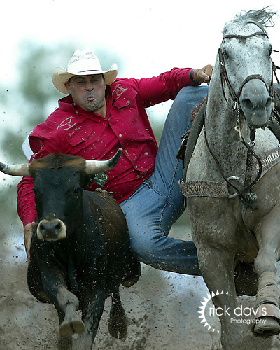 Professional Rodeo Cowboy Association steer wrestler Jason Miller of Lance Creek, Wyoming competing in the short go round action at the 111th annual Cheyenne Frontier Days Rodeo in Cheyenne, Wyoming. Jason's time of 11.0 seconds in the muddy Frontier Park arena gave him an aggregate time of 28.1 seconds on three head, and tied him with William Beierbach, from Maple Creek, Saskatchewan for the championship award.