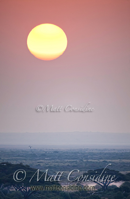 Sunset over Amboseli, Kenya, with a beautiful orange orb suspended in a pink sky over a misty view of the marshland plains stretching to infinity, Kenya, Africa (photo by Wildlife Photographer Matt Considine)