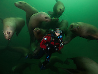 TA1076-D. Steller Sea Lions (Eumetopias jubatus), playful juveniles interacting with scuba diver (model released) near rookery. British Columbia, Canada, Pacific Ocean.<br /> Photo Copyright &copy; Brandon Cole. All rights reserved worldwide.  www.brandoncole.com