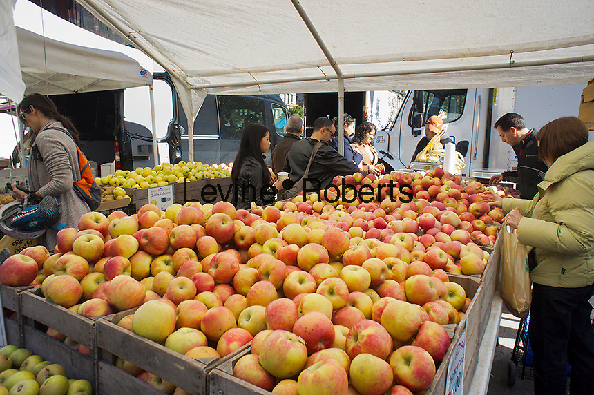 Shoppers choose Honeycrisp apples  at the Union Square Greenmarket in New York on Saturday, October 13, 2012.   (© Richard B. Levine)