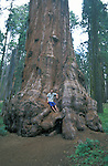 Ryan sitting on a giant redwood tree, Mendocino County, California