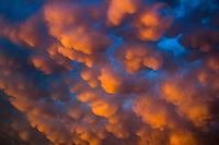 Mammatus clouds are lit up with an orange glow by the setting sun near Norman Oklahoma after the passage of severe thunderstorms.