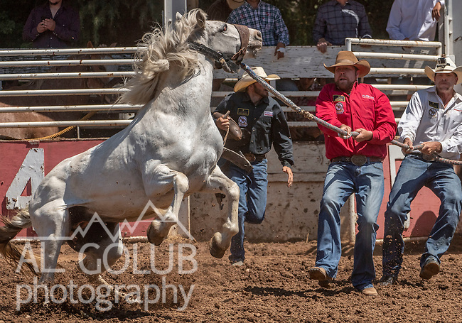 All Teams struggle with horse during the Team bronc riding event at the 62nd annual Mother Lode Round-up on Sunday, May 12, 2019 in Sonora, California.  Photo by Al Golub