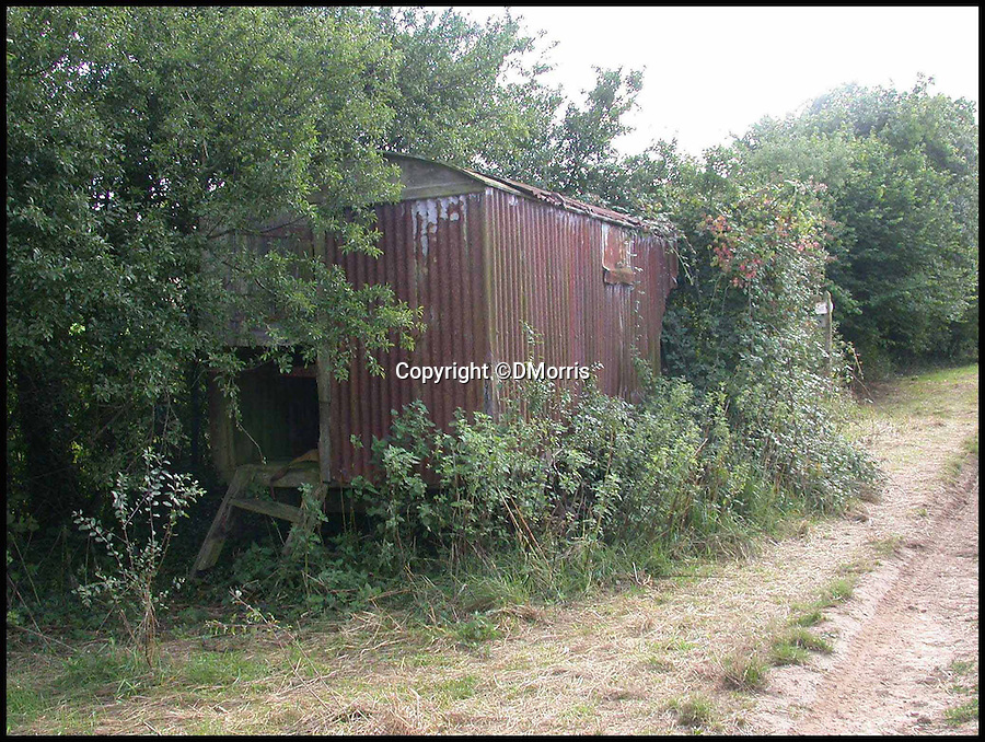 BNPS.co.uk (01202 558833)<br /> Pic: DMorris/BNPS<br /> <br /> The shed as discovered by David Morris, engulfed by a hedge at Waterston Manor.<br /> <br /> A shepherd's hut used by the real-life Gabriel Oak, the main love interest in the new movie Far From the Madding Crowd, has been saved from ruin after being found abandoned in a hedgerow.<br /> <br /> The cabin on wheels belonged to Waterston Manor, the inspiration for fictional Weatherbury Farm which Carey Mulligan's character Bathsheba Everdene owns in the film adaptation of the Thomas Hardy classic novel.<br /> <br /> It has been returned to its former glory by historian David Morris.
