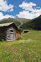 Hay barns in alpine meadow. Nordtirol, Austrian Alps, Austria, June.