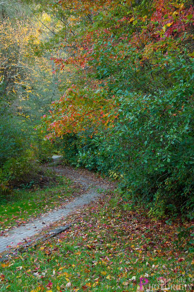 Amazed by the nature's beautiful color on the trail path to twin falls, you cannot decorate the path more as the dried fall leaves have.