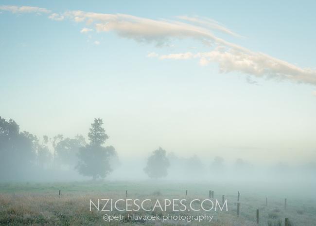Misty dawn with old totara trees on farmland in Whataroa, South Westland, West Coast, New Zealand, NZ