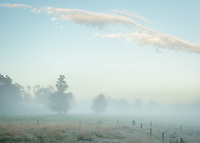 Misty dawn with old totara trees on farmland in Whataroa, South Westland, West Coast, New Zealand, NZ