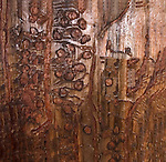 Galleries cut by Mountain Pine Beetle